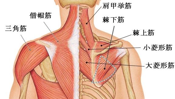 「首の痛み 」の画像検索結果